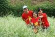 Cập Nhật Những Điểm Du Lịch Ngắm Hoa Cải Trắng Mộc Châu