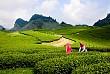 Nông Trường Mộc Châu - Điểm Đến Hiếm Có Ở Việt Nam