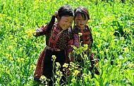 Dân Tộc Mông Tại Mộc Châu