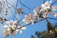 Du Lịch Mộc Châu Những Mùa Hoa Đẹp Không Thể Cưỡng Lại
