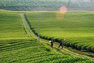 Hình Ảnh Đất Nước Việt Nam Qua Ống Kính Nhiếp Ảnh Gia Pháp