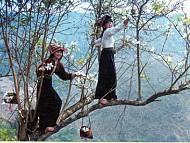 Lễ Hội Hoa Ban Của Dân Tộc Thái