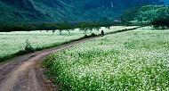 Mộc Châu bốn mùa rực rỡ sắc hoa