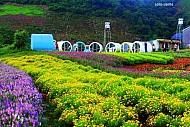 Mộc Châu thiên đường du lịch đáng đến nhất vào dịp cuối năm