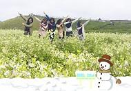 Mùa Hoa Trắng trên đất Mộc Châu nở rộ trong ngày Noel 2018