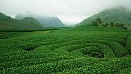 Những điểm du lịch Mộc Châu tuyệt đẹp bạn nên biết