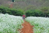 Những Điểm Ngắm Hoa Cải Tuyệt Đẹp Trên Cao Nguyên Mộc Châu