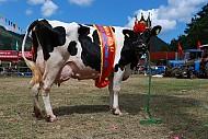 """Ở Mộc Châu có cuộc thi """"Hoa hậu bò sữa"""" dành cho các thí sinh ngàn cân"""