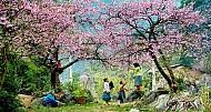Tìm Về Mộc Châu - Miền Đất 4 Mùa Hoa Nở