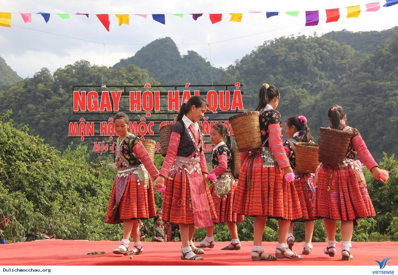Lễ Hội Hái Mận Mộc Châu - Ảnh 4